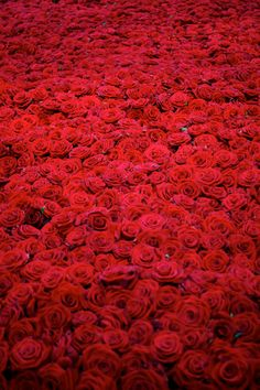 Anya Gallaccio - Red on Green, installation made of 10,000 roses from Holland.