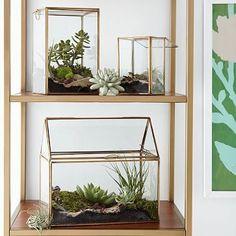 The Urban Grow   Terrarium