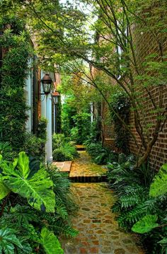 Do you have a side yard garden that is just not turning out how you want it to? Well, I would like to share with you some ideas on how to make your side yard garden look much better. There… Continue Reading → Side Yard Landscaping, Landscaping Ideas, Backyard Ideas, Backyard Designs, Landscaping Plants, Pavers Ideas, Tropical Landscaping, Pathway Ideas, Patio Plants