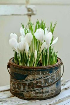Creative Spring Garden Pots and Planters Easter Flower Arrangements, Easter Flowers, Love Flowers, Spring Flowers, White Flowers, Floral Arrangements, Beautiful Flowers, Spring Blooms, Container Plants