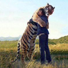 The best Friend Ever  Awesome Picture  Tiger