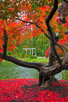 Old Westbury Gardens (Long Island, NY)...picture perfect fall? This really makes me wanna go there now....
