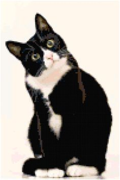 Cross Stitch Black and White Cat Portrait Pattern Design Chart Feline Domestic Animal PDF Digital File Instant Download by theelegantstitchery on Etsy