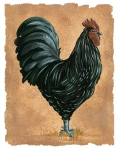 Black Rooster with painterly Edge rooster by HamiltonArtandDesign