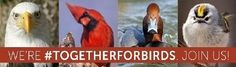 Join Together for Birds and Ask Lawmakers to Protect the Environment and Wildlife Habitat