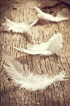 signs (whenever I find a feather in an odd place I smile because I know my husband Rick is with me.He's my angel! White Feathers, Bird Feathers, Resene Colours, Feather Meaning, Color Palette Generator, Feather Angel Wings, Angels Among Us, Design Seeds, Guardian Angels