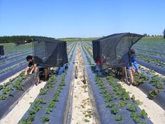Tunnel Greenhouse, Tractor Implements, Market Garden, Small Farm, Farm Gardens, Natural Resources, Image House, Science And Nature, Permaculture