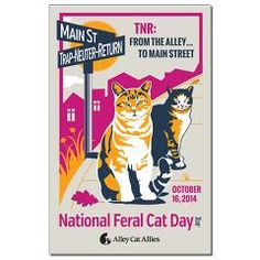 1000 images about for the love of feral cats on pinterest
