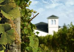 Casa Larga Vineyards - Rochester, NY
