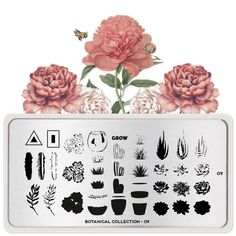 Discover our new botanical collection filled with blooming flowers, vintage blossoms, beautiful butterflies and lovely succulents. Perfect for any spring day! Succulent Pots, Cacti And Succulents, Blooming Flowers, Floral Flowers, Stamping Nail Polish, Image Plate, Stamping Plates, Spring Day, Beautiful Butterflies