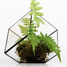 Бонсай бесплатная доставка многогранник прозрачное стекло геометрические террариум настольная сочные завод микро волокна пейзаж террариум купить на AliExpress