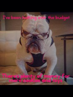 "❤ ""I've been looking over the budget ~ There  is plenty of money for MORE cookies toys"" ❤ Posted on Chicago English Bulldog Rescue, Inc."