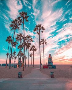 How to take amazing summer travel photos – by the experts - For this photo, the colours of the famous graffiti palm trees in Venice Beach compliment the colour - Photo Wall Collage, Picture Wall, Beautiful Sunset, Beautiful Places, Beach Aesthetic, California Dreamin', California Palm Trees, Venice Beach California, California Camping
