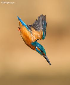 Dive In by Rob Cross on 500px