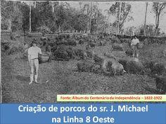 IJUÍ - RS - Memória Virtual: Criação de porcos na Linha 8 Oeste, em 1922... na ...