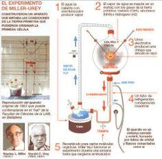 Urey y Miller llevaron a cabo un exprimento que demostraba la hipótesis de Oparin y Haldane:las sustancias que se encontraban en la amósfera primitiva de la Tierra pudieron reaccionar y producir las primeras biomoléculas.