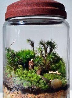I like the ones with the mini scenes Mini Terrarium, Garden Terrarium, Glass Garden, Little Gardens, Small Gardens, Air Plants, Indoor Plants, Room With Plants, Cactus