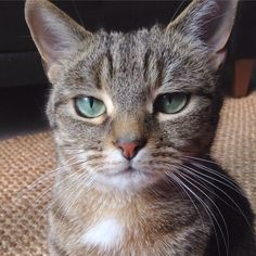 Am I prettier than the other cats on Pinterest?...