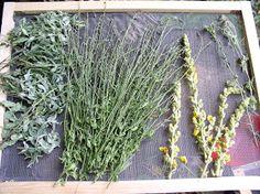 A MAGYAROK TUDÁSA: Gyógynövények alkalmazása, Gyűjtése - Fizikai és lelki gyógyulás Herbs, Herb, Spice