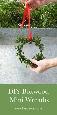 DIY Christmas Decorating Ideas. DIY Boxwood Mini Wreaths. Get the materials needed and step by step instructions to make your own. Happy Holidays.