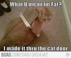 Im not fat....