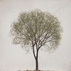 Tree #13   Myoung Ho Lee