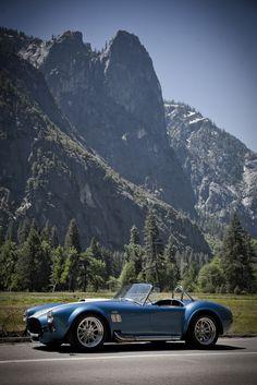 Cobra in Yosemite