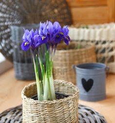 decoraconmaría: PLANTAS DE INTERIOR Y OTRAS Plants, Furniture Restoration, Indoor Plants, Interior Design, I Love, Plant, Planets