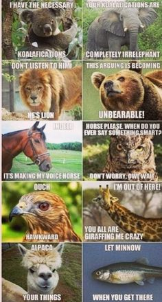 Funny animal pic