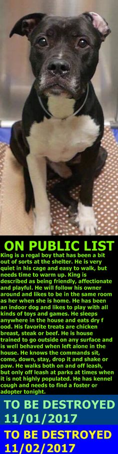MURDERED 11-2-2017 ---  Hello, my name is King. My animal id is 10016. I am a male black dog at the Brooklyn Animal Care Center. The shelter thinks I am about 5 years 2 weeks old.  I came into the shelter as a owner surrender on 17-Oct-2017, with the surrender reason stated as animal behaviour – aggressive towards people.  http://nycdogs.urgentpodr.org/king-10016/