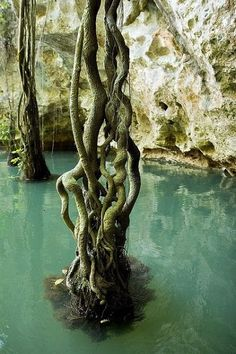 Barton Creek Cave in Belize