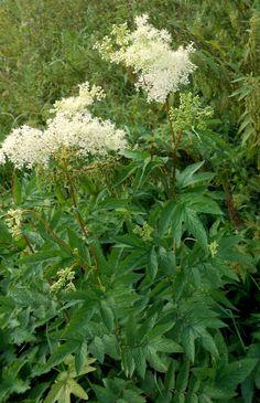 Herbs, Plants, Food, Health, Essen, Herb, Meals, Plant, Yemek