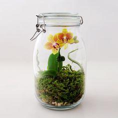 mason jar orchid terrarium greenery nyc - and many other cute terrarium ideas