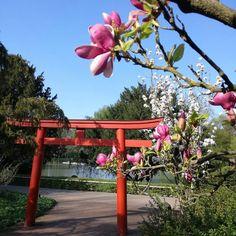 Wer im #April einen Besuch im Zoologischen Stadtgarten plant der sollte unbedingt im #Japangarten vorbei schauen. Hier blüht alles Rosa und Pink  #visitkarlsruhe #visitbawu #bwjetzt #unendlichregion #karlsruhe #karlsruherecken #zoologischergarten #flowerpower #blossom #magnolie #bluesky #travelgram #travel #explorethecity #explorekarlsruhe #citylife #frühling #allesblüht
