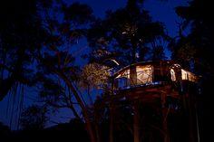 tree house blue mountains