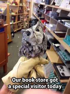 Our book store for a visitor today. Well Hello There, Little Guy <<<Aww😍 Funny Animal Pictures, Cute Funny Animals, Cute Baby Animals, Funny Cute, Animals And Pets, Cute Pictures, Random Pictures, Nature Animals, Funny Pics