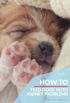 Tips for Renal Diet for Dogs Dog Kidney Disease Diet, Kidney Failure, Make Dog Food, Dog Diet, Dog Hacks, Dog Feeding, Old Dogs, Dog Care, I Love Dogs