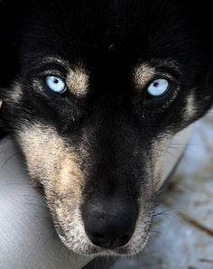 macrofotografia cães - Pesquisa Google