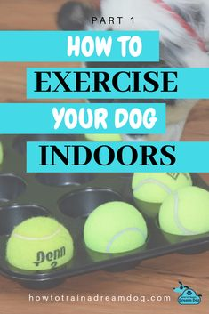Regular exercise is SO important for your dog! Unfortunately, the weather doesn't always cooperate to make outdoor exercise possible. Get recommendations for some indoor equipment, games, and activities to workout your dog.  A well-exercised dog is a tired dog.  A tired dog equals a happy owner! Pin to save for a rainy day! Read parts 2