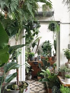 The most inspirational place to buy plants in London
