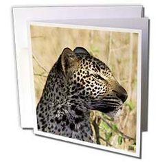 Kike Calvo Animals - Leopard, Panthera pardus, Masai Mara National Park Kenya Africa - Greeting Cards-12 Greeting Cards with envelopes by Kike Calvo, http://www.amazon.com/dp/B004KPYTNA/ref=cm_sw_r_pi_dp_B1ssrb1PN7TDM