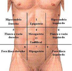 Resultado de imagen de división del abdomen en  4 cuadrantes