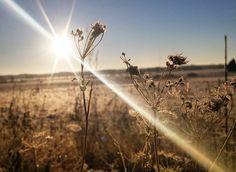❄#beautiful #countryside #sun #winter #snow #finland #nature #naturelovers
