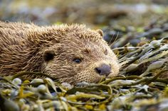 Otter by james morris on 500px