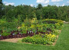 Vegetable Garden  | Left Side Vegetable Garden