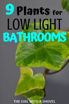 Most people have little to no external lighting in their bathrooms. But this doesn't mean that you can't have plants in your bathroom decor! Check out this list of low light plants for the bathroom!