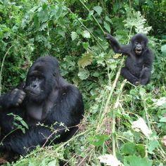 . Equatorial Africa, Rainforest Animals, Beautiful Forest, Tropical Plants, Congo, Rainforests, Wildlife, Tours, Adventure