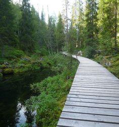 Pyha-luosto national park, Finland, Europe