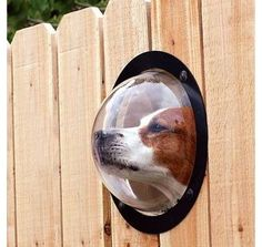 Lol.  Here's an idea for Bella Soleil.  She can still look and see what's going on outside the yard, but she can't go anywhere.