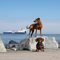 332 SHIPDOGDOG  Photograph  signed and numbered 14 x 14 by edart, $19.50